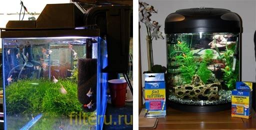Нужен ли фильтр в маленьком аквариуме