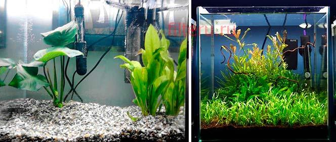 Какие бывают проблемы с фильтрацией воды в аквариуме