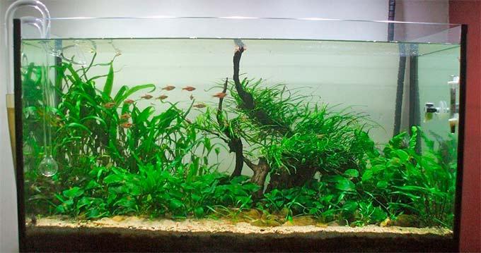 Какой выбрать внешний фильтр для аквариума