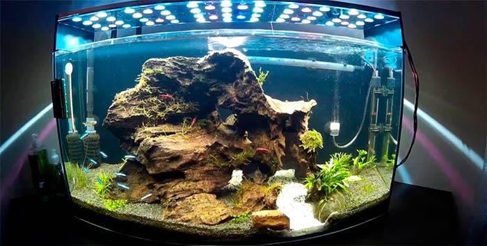 На что смотреть при выборе внутреннего фильтра для аквариума